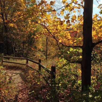 baltimore woods